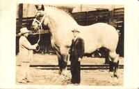 Brooklyn Supreme, world's largest horse, owned by C. G. Good & Son, Ogden, Iowa