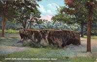 Fairmount Park, the Old Redwood Stump, Council Bluffs, Iowa