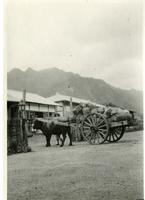 Photo of a Wooden Cart with Ox