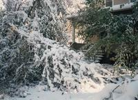 1300 Block of Elm Street After October 1997 Snowstorm