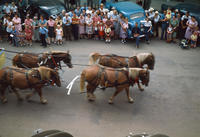 Four Horses Pulling Wagon During 1948 Grinnell Day Parade