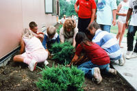 Children Planting a Shrub at Davis Elementary