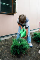 Boy Watering Newly Planted Shrub Outside of Davis Elementary School
