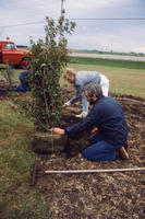 Three People Planting Trees in Ground