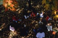 A Circle of Students Sit Beneath a Tree in the Fall