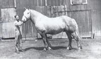Harry Otto and his Horse