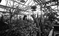 Ellen D. Ferry '74 in the Hall of Science Greenhouse