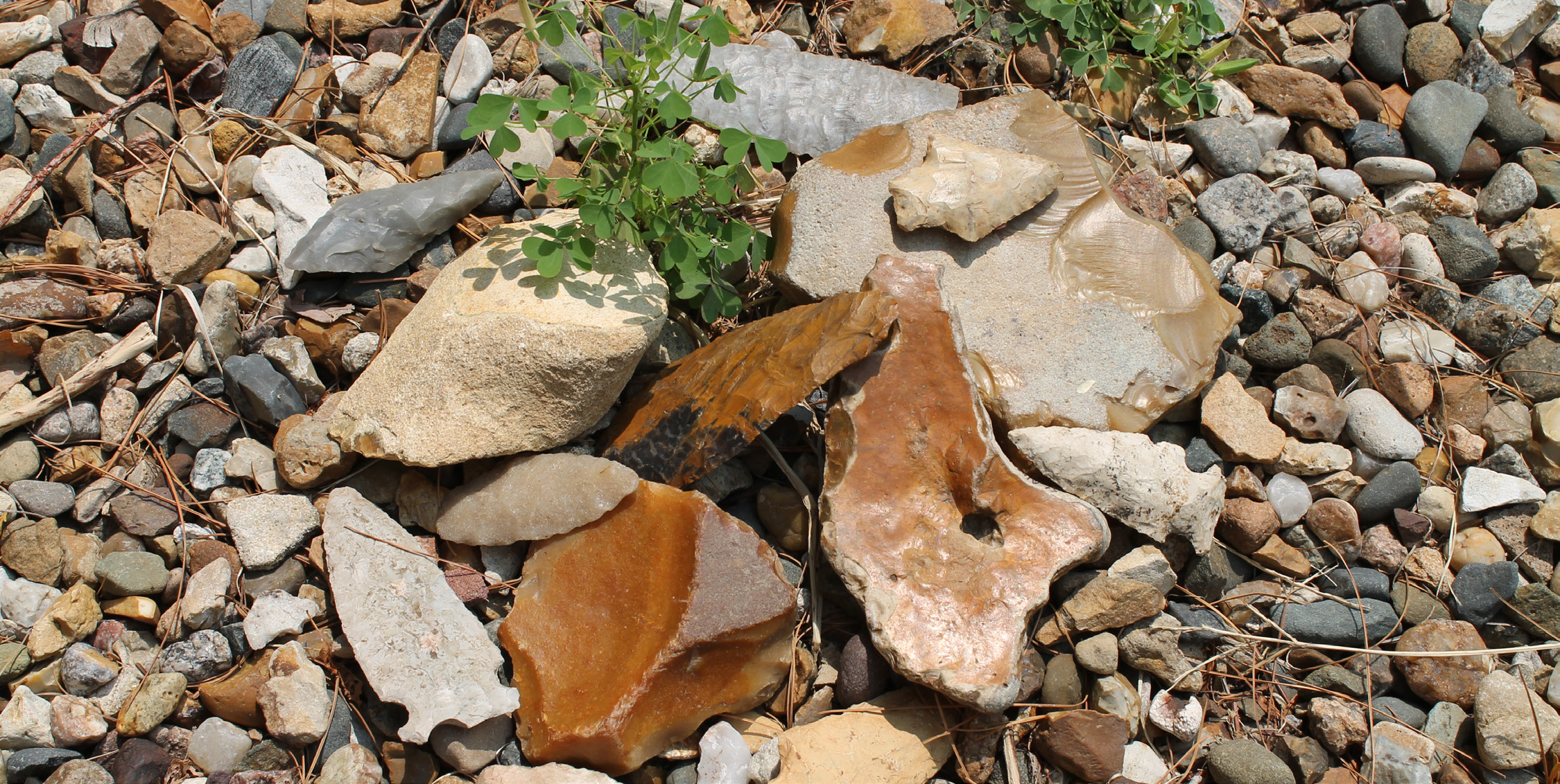 """Old """"Arrowheads"""" from the College's former Parker Natural History Museum, along with river-rolled flints that look like artifacts. Photo courtesy of John Whittaker"""