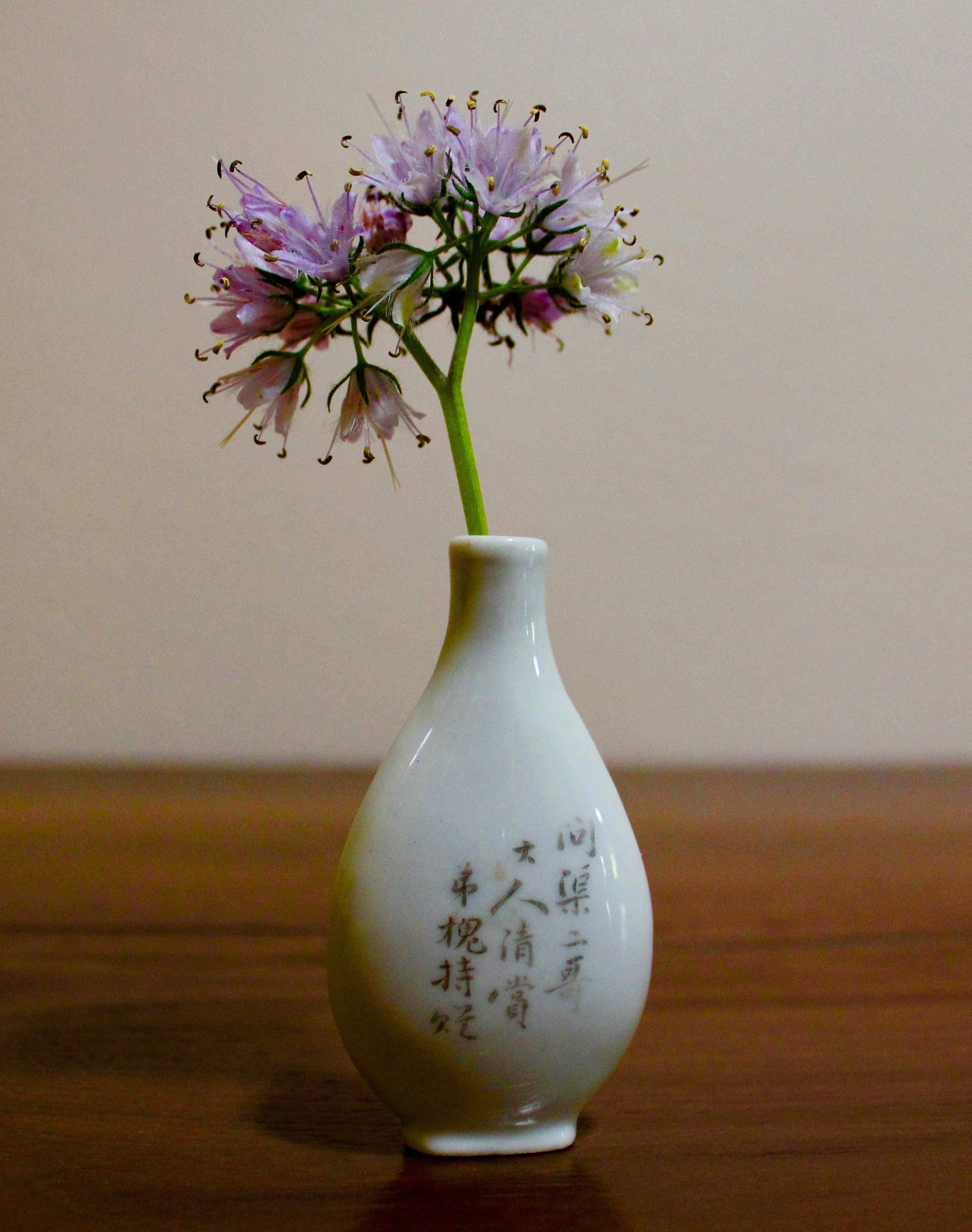 Prairie onion (*Allium stellatum*)
