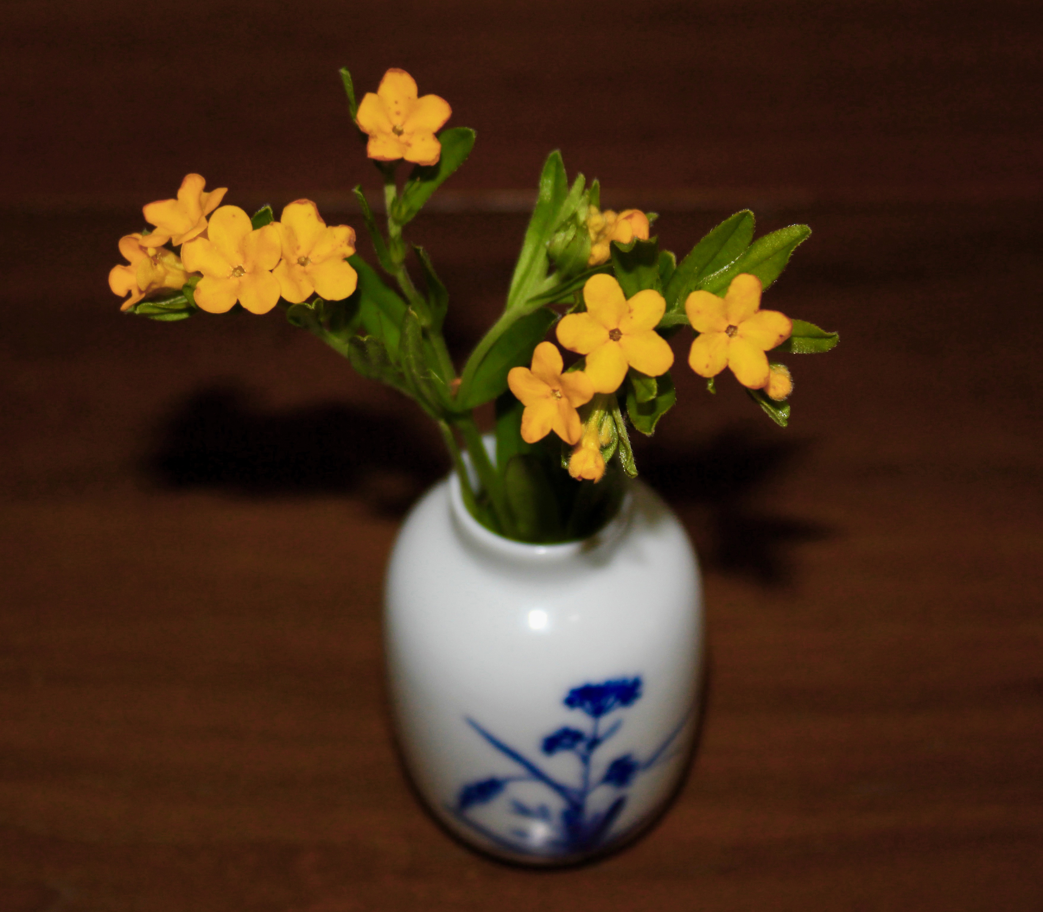 Hoary Puccoon (*Lithospermum canescens*)