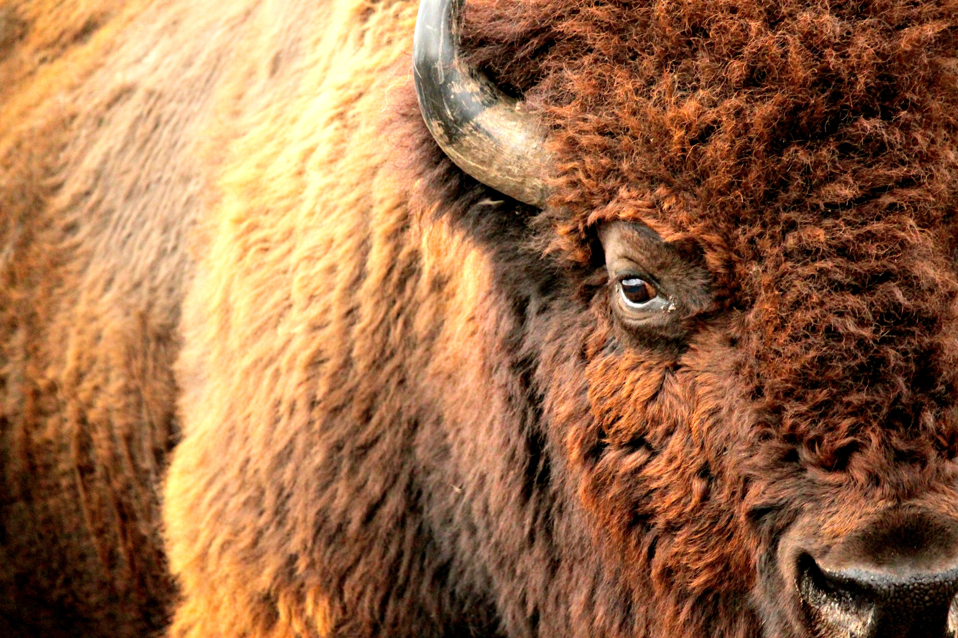Up close and personal with one of the preserve's herd. Photo by Josie Briggs