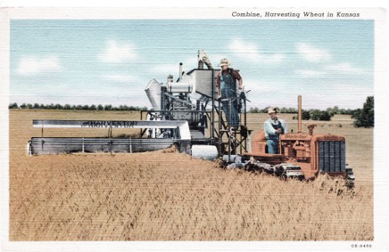 'This postcard shows what I think is an International Harvester combine of the sort that I worked on. This looks very much as I remember the combines that I most commonly saw, although I do not recall ever seeing a Caterpillar tractor in a wheat field. My memory is primarily of combines with the cutting platform on the night-hand side pulled by tractors with rubber tires.' Postcard from the collection of Beryl Clottfelter