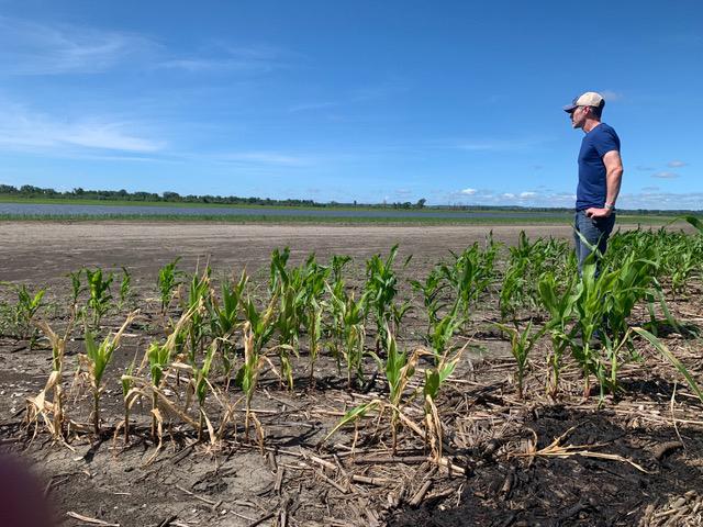 Corey McIntosh surveys stunted corn crop and barren flooded land, July 2019. Photo courtesy of Corey McIntosh